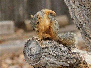 一只松鼠把它自拍放上网络,看完也是醉了