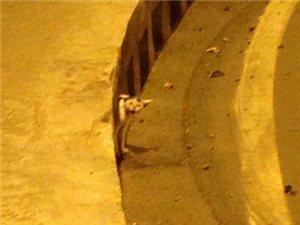 有只流浪小�在��溪往隧道方向的拐��地下道