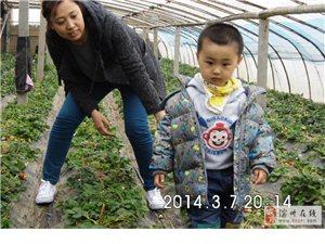 滨州新爱婴2014年草莓采摘活动照片
