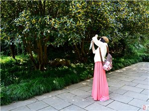 叶密千层绿,花开万点黄