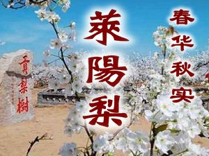 莱阳梨图片和介绍,莱阳梨产地,莱阳梨膏,莱阳梨专题