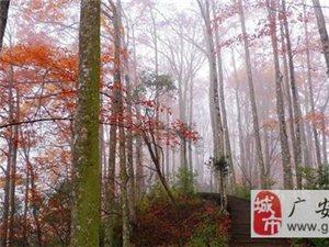 """光雾山红叶节""""相约光雾山、共享红叶情、体验原生态"""""""
