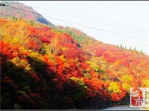 """梦开始的地方10月19日西厢、镇门峪(摘柿子)一日游 (""""北方小漓江"""""""