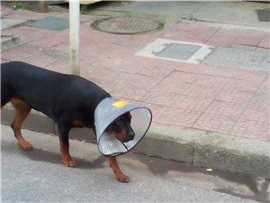 今天路过千秋广场旁,看到一只狗竟然....