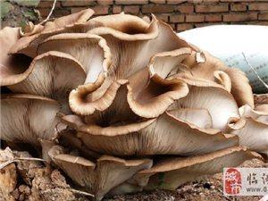 �R潼�F巨型蘑菇