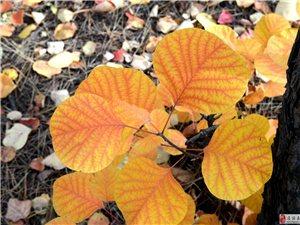 秋天的�色