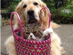 谁说狗和猫不能好好相处