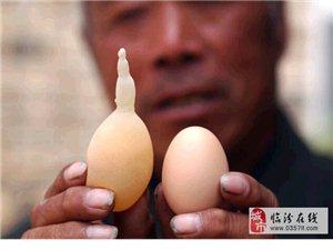 临汾安泽李老汉家的鸡竟下了个长着长长尾巴的鸡蛋(图)