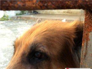 也�S我真的和狗狗有�,竟被我�到她的主人,��^�贤ǎ�她愿意�我�ё吖饭�