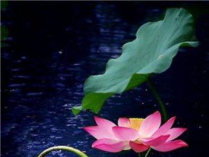 瑜伽休息术很重要 精神身体双层受益