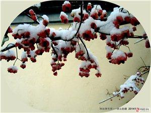 阿拉善雪景真美
