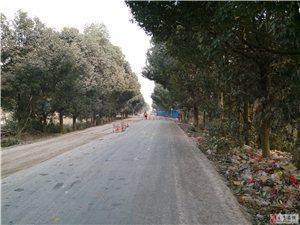 河岭段国道修筑水泥路(组图)