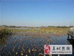 秋涩中的衡水湖