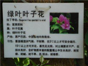 澳门太阳城网站植物园的花花草草树树木木