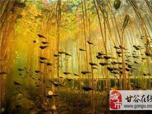一条鱼严重的世界!太美了。真的