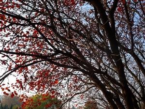 发几片秋叶