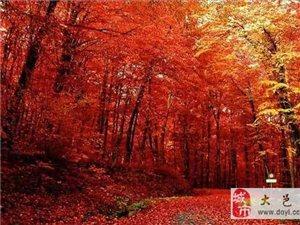 到西岭雪山免费观赏最后一波红叶