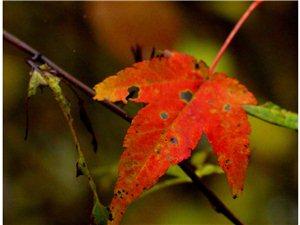 秋天映像―――――十八月潭