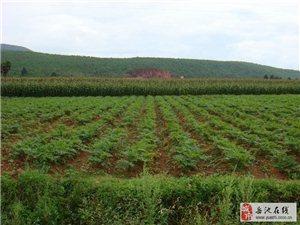 四川岳池县发展中药材种植大丰收 农民笑开颜
