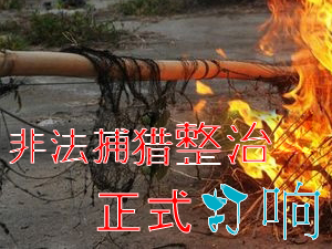 整治捕杀贩卖野生动物行为