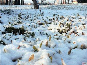 发几张去年冬天拍的照片!!
