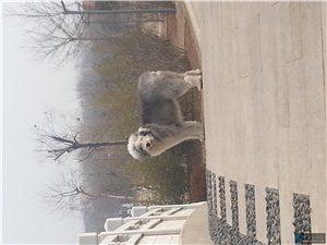 寻找丢失狗狗