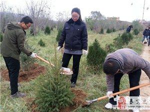 秦安县司法局积极参加政法系统义务植树活动
