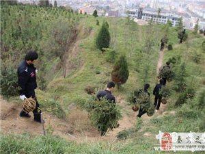 秦安县公安局积极参与全县政法系统义务植树活动