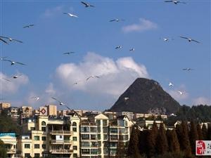 威尼斯人线上平台红嘴鸥与春城相蓖美