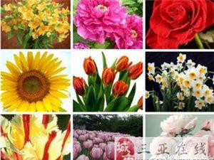 世界各国国花