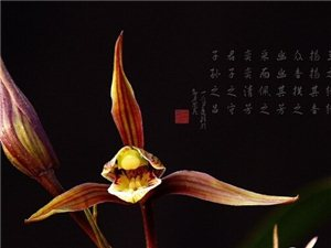 台州(椒江)第二届寒兰博览会暨春蕙兰艺草展