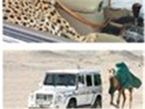 有些事你可能只能在迪拜才能见到。。