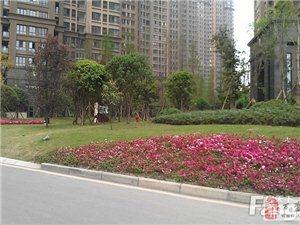 重庆36万买3房不是谣言