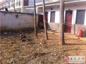 河南固始县救助站流浪人员待遇凄惨:小孩被拴树上
