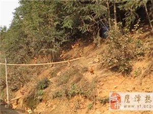 余江黄庄乡:养殖户土鸡蛋滞销  希望帮忙找销路,火速转起