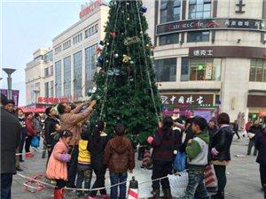 """步行街圣诞树装饰品被抢夺,澳门威尼斯人官网市民感叹""""素质"""""""