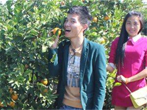 湛江廉江红橙节、自驾游摘红橙攻略
