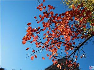 红叶 蓝天