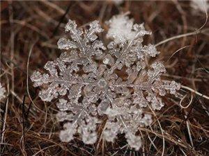 见过这么美的雪花吗?
