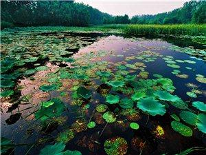 河南新增8个国家级湿地公园 中央批6100万保护