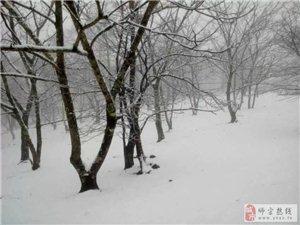 菌子山!飞雪。。。
