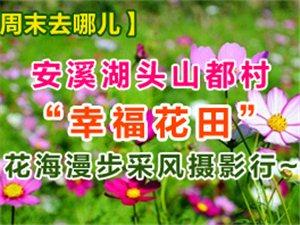"""【周末去哪儿】安溪湖头山都村""""幸福花田"""" 花海漫步采风摄影行"""