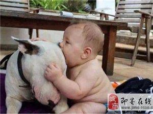 生儿子和生女儿的差别,超现实!超无奈!!