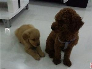 �B一只狗就像�б��孩子