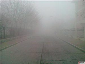 【手机拍客】雾中油城