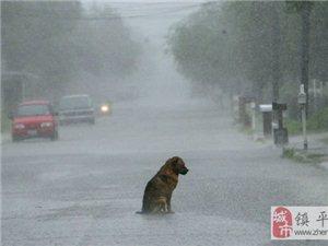 狗的感人故事�D片,你能忍到第���不哭?