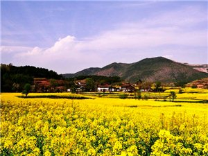 2015年汉中油菜花节