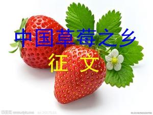 """""""中国草莓之乡""""征文"""