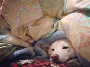 冬天我真的不想起床上班啊~~~