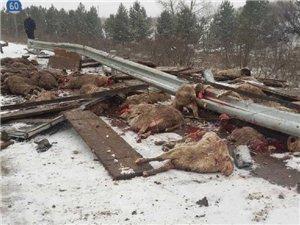 榆林一高速上���确� 20多只羊死亡